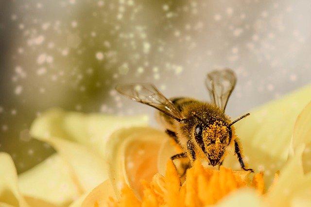 新しい花粉対策スティック 微電なごみ