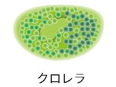 ハワイアンスピルリナ&醗酵クロレラ